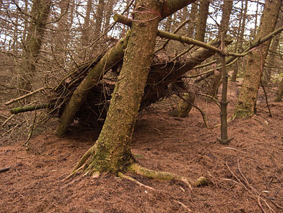 A poorly built shelter left standing in the woods. The type of eyesore that gives bushcraft a bad name.